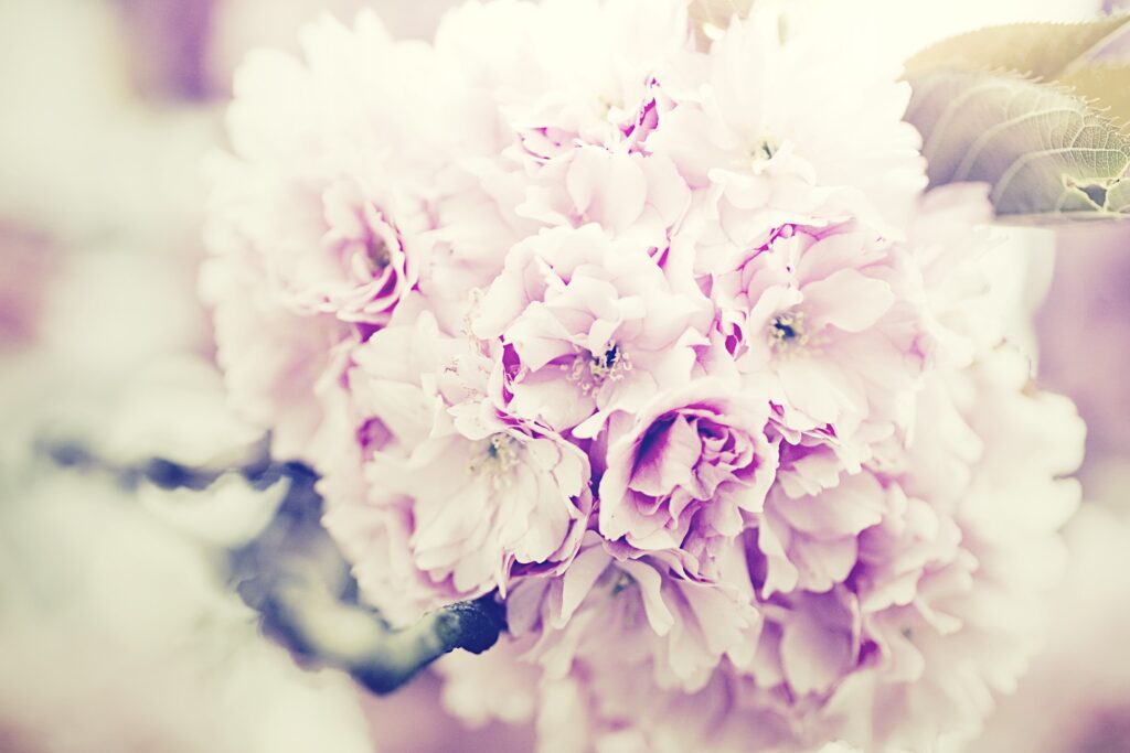 flowers bouquet 1031266 1920