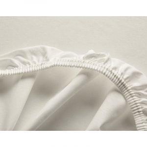 Cotonea Rjuha Edel-Linon | Natur | Več velikosti